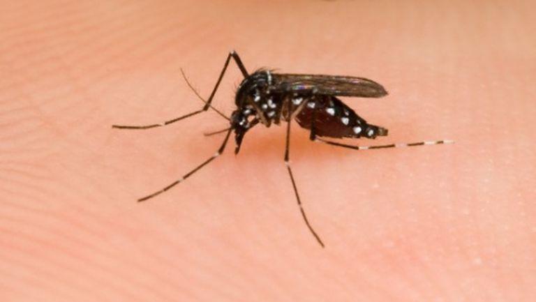Sănătate: soluţii împotriva înţepăturilor de insecte