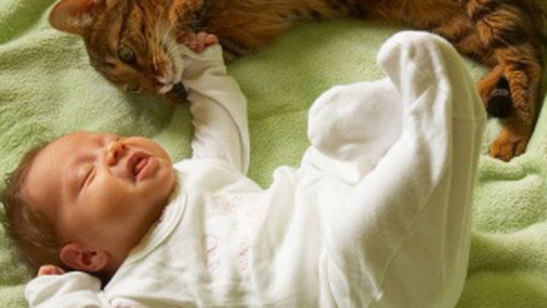 Bebeluşul şi animalul de companie