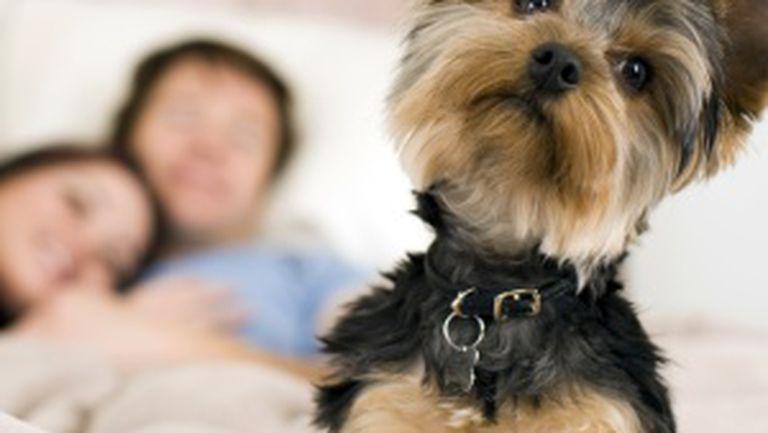 Ce te învaţă câinii despre relaţia de cuplu