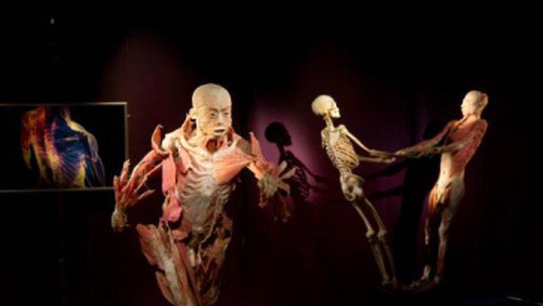 Bizar: Top 3 expoziţii ciudate cu cadavre de oameni şi animale
