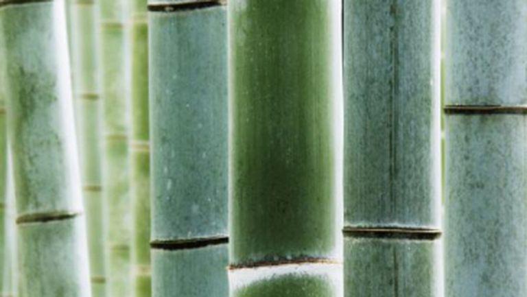 Frumuseţe: Bumbac, bambus și mătase, cei 3 magnifici ai naturii