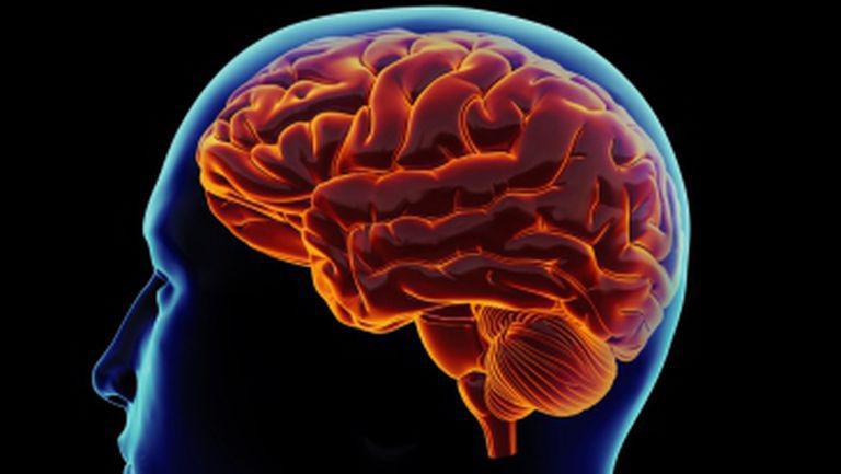 Cinci mituri despre creier care nu vor dispărea