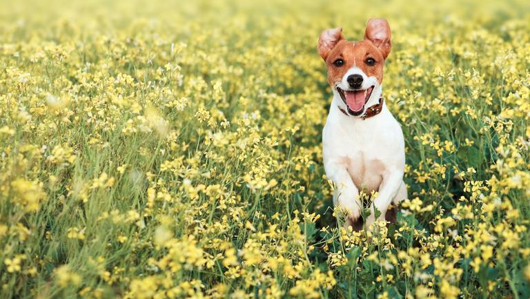 7 lucruri mai puțin cunoscute despre câinele tău
