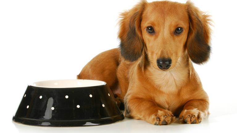 (P) Magazinele online, o alegere ideală pentru a achiziționa mâncare pentru animale