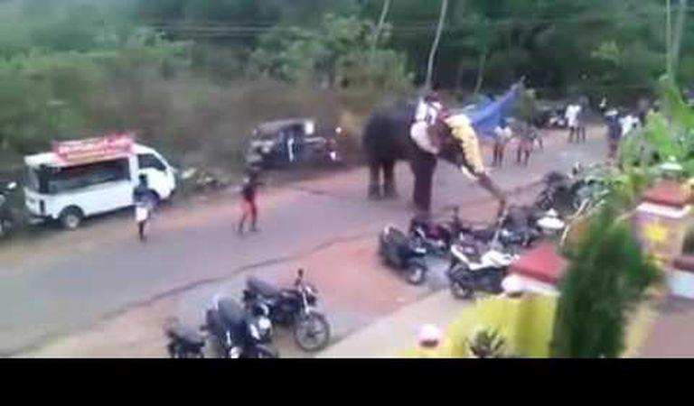 Un elefant furios distruge tot ce-i iese în cale. Inclusiv mașinile și motocicletele parcate pe marginea drumului