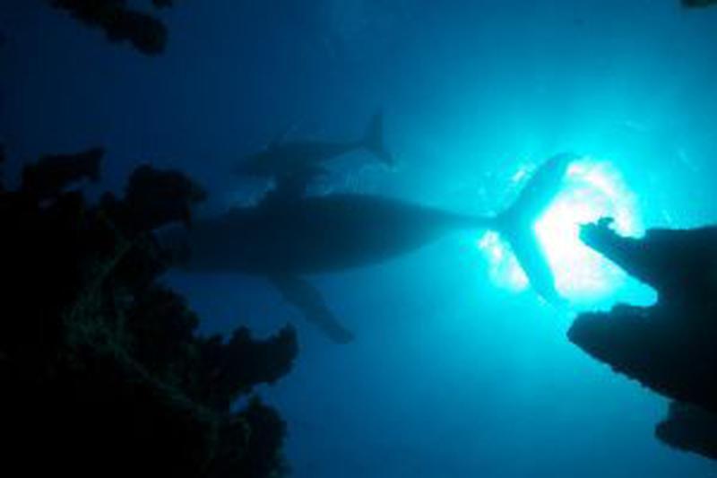 Atlantic - Wildest Ocean on Earth 1 (1)