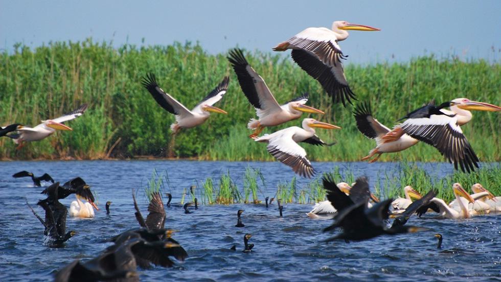 Dă startul verii în Delta Dunării! Tarife reduse cu 30% la vacanțele Delta pentru Toți