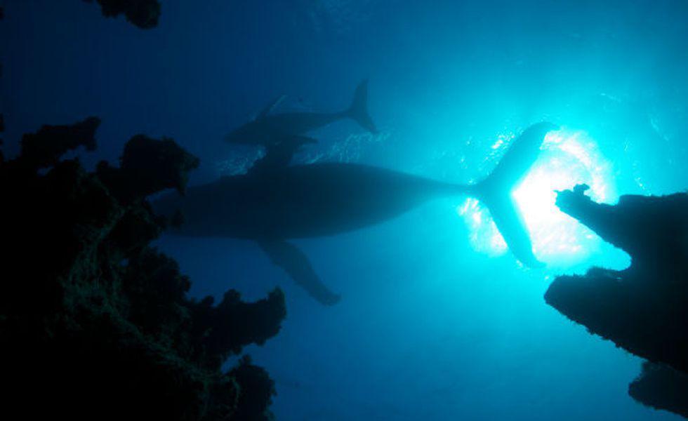 Atlantic   Wildest Ocean on Earth 1  (1)
