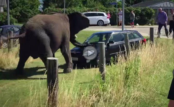Un elefant își face de cap cu o Skoda Fabia Combi