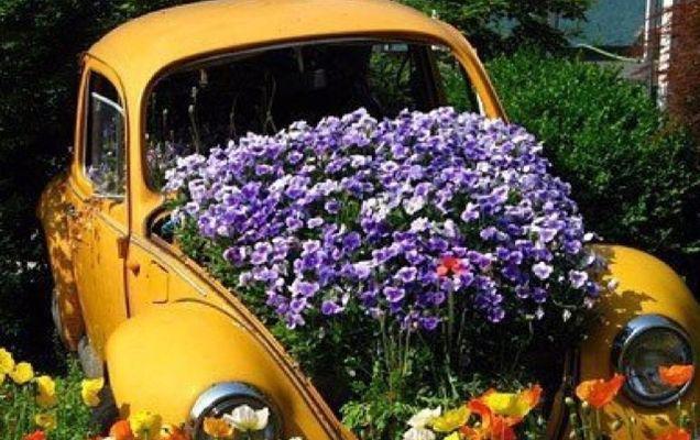 Cum să faci odorizante naturale pentru mașină