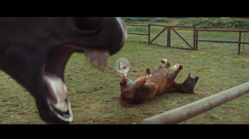 De râsul cailor. Cea mai bună reclamă pentru sistemul Volkswagen Trailer Assist